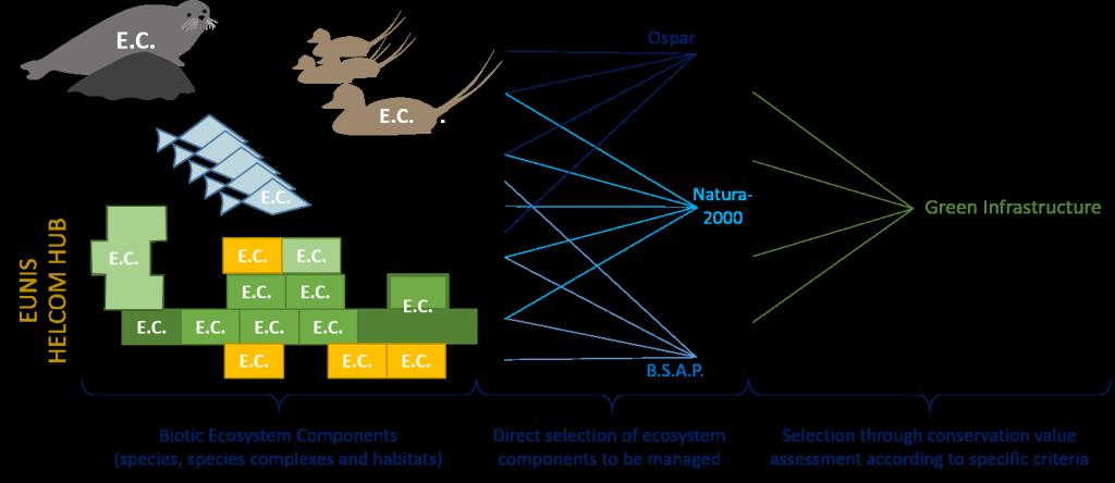 Selection of E.C.