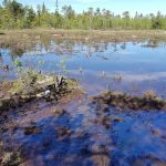 eDNA-inventories as decision support in Environmental Impact Assessments