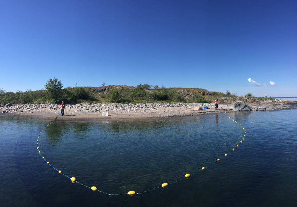 Using a beach seine net to collect fish