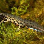 New research project on aquatic eDNA: Life-DNAquatic!